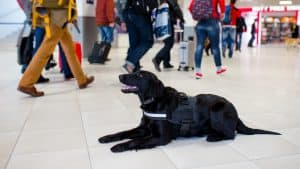 """An """"Emotional Support"""" Animal Mauls a Little Girl at an Airport"""