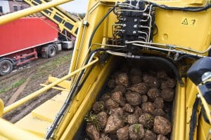 Sugar Beet Truck Traffic Increases Accident Concerns