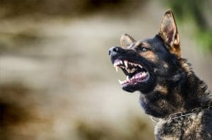 Six Important Things You Should Do After a Dog Attack